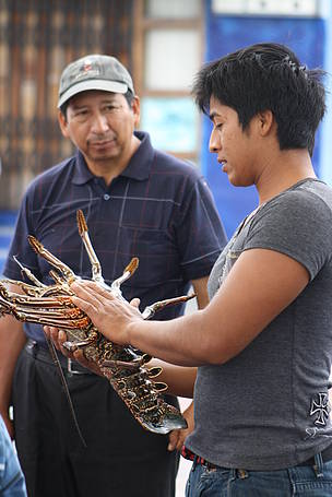 Spiny Lobster in the Galapagos is Making a Sustainable Comeback