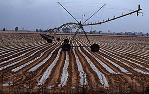 Irrigation of a strawberry field in Spain - an example of the subsidy programme undermining southern markets, and negatively impacting the environment