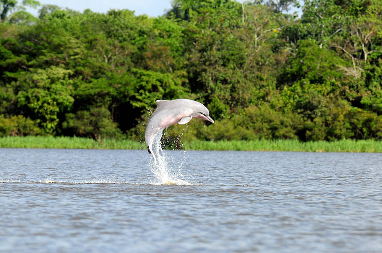 International approval for South American conservation plan for river dolphins
