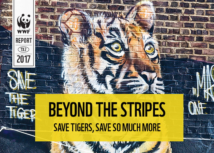 Beyond the Stripes - Save Tigers Save So Much More