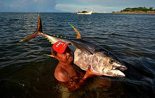 Fisherman brings in a yellowfin tuna