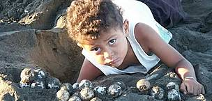 A child helps collecting olive ridley turtle (<i>Lepidochelys olivacea</i>) eggs, ...  © WWF / Carlos DREWS