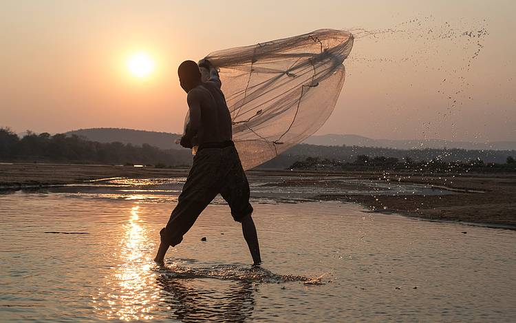 Massive decline in migratory fish threatens livelihoods of hundreds of millions