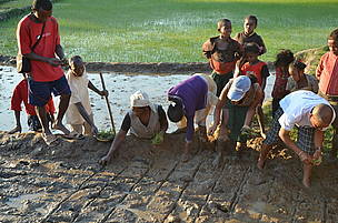 Local people working in improved rice agriculture, Ivohibe, Madagascar.