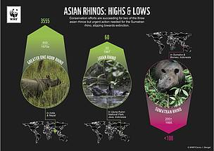 Two species of Asian rhinos are increasing slowly, but the Sumatran is slipping closer to extinction