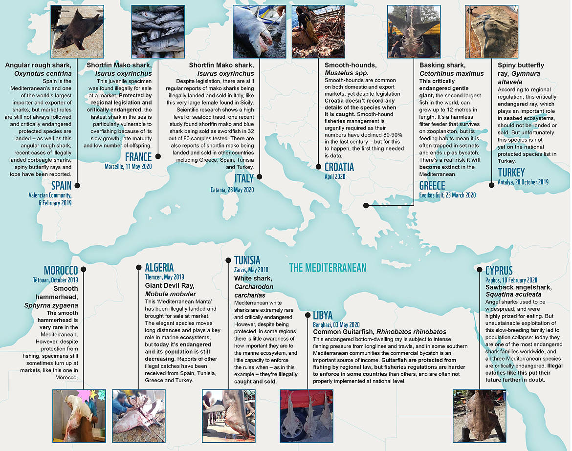 The map of IUU fishing of sharks and rays in the Mediterranean