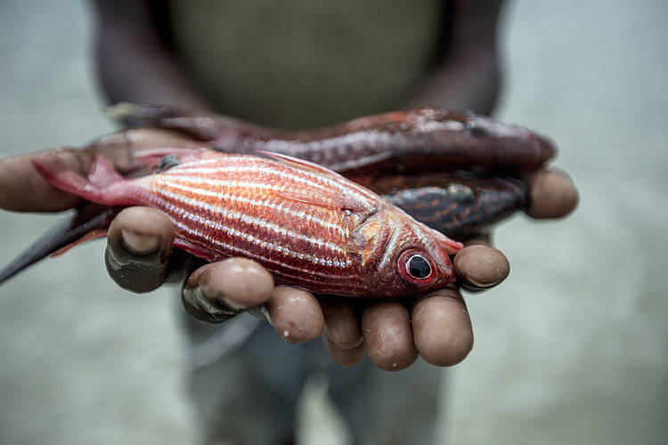WWF urges FAO to chart a new course for fisheries and aquaculture