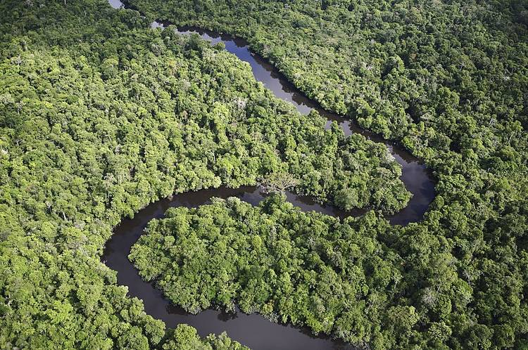 Colombia, Germany, Norway and the UK step up efforts to reduce deforestation in Colombia: WWF responds