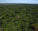 Aerial view of forest cover