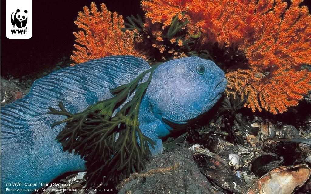 Free download tropical fish coral reef desktop desktopia hd wallpaper
