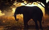 WWF-Canon / Martin HARVEY