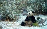 (c) WWF / Fritz Poelking