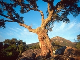 (c) WWF-Canon / Edward Parker