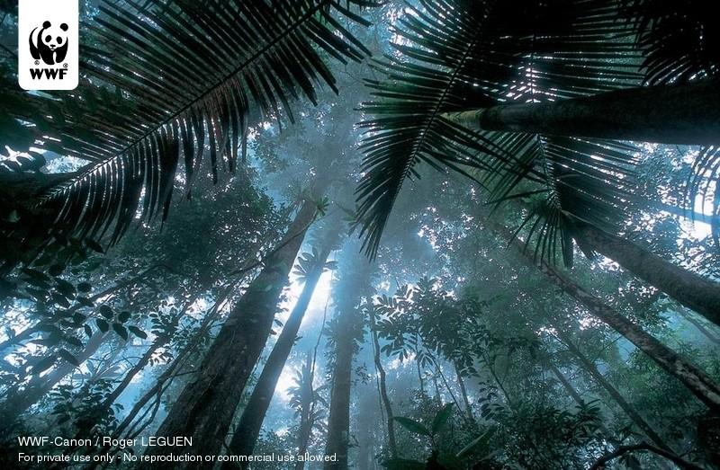 WWF-Canon / Roger LEGUEN