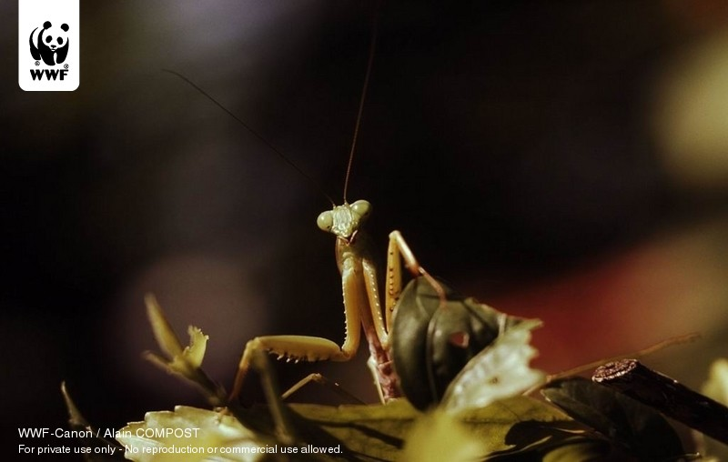 WWF-Canon / Alain COMPOST