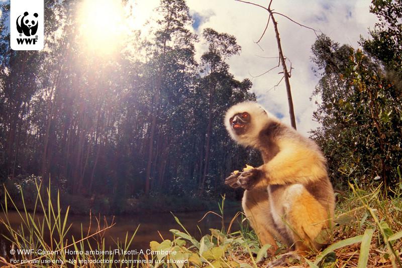 © WWF-Canon / Homo ambiens/R.Isotti-A.Cambone