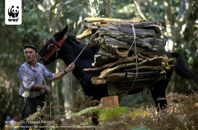 WWF-Canon / Edward PARKER