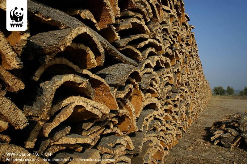 WWF-Canon / S. RICH