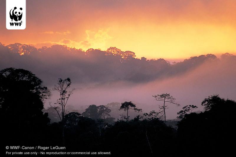 © WWF-Canon / Roger LeGuen