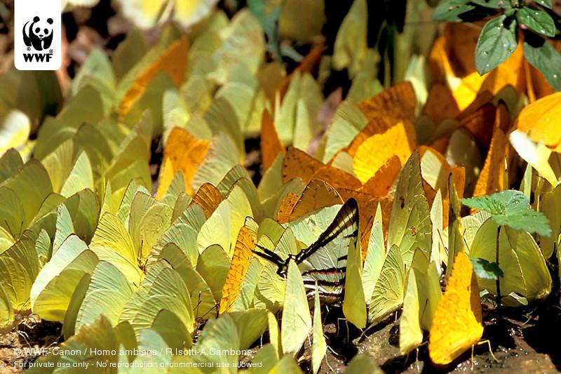 © WWF-Canon /  Homo ambiens / R.Isotti-A.Cambone
