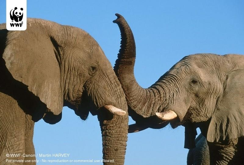 © WWF-Canon / Martin HARVEY