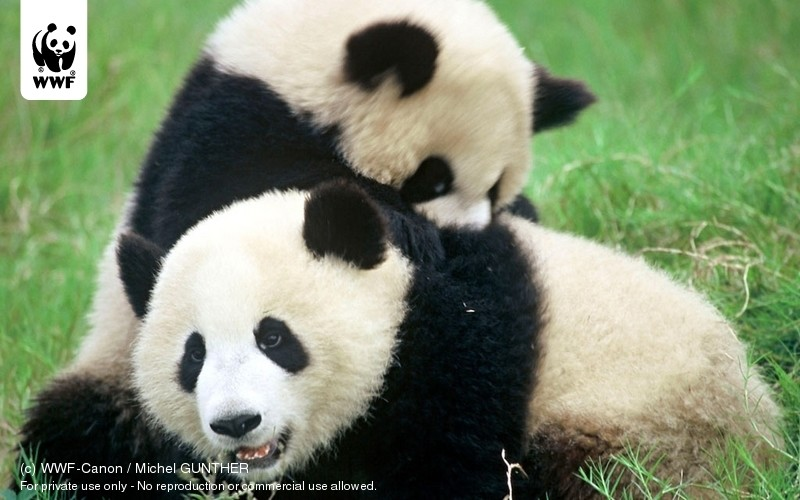 (c) WWF-Canon / Michel GUNTHER