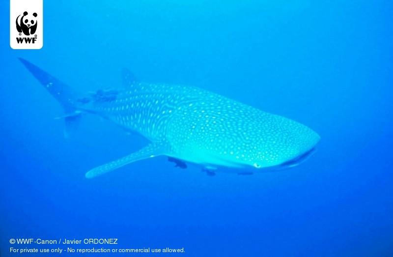 © WWF-Canon / Javier ORDONEZ