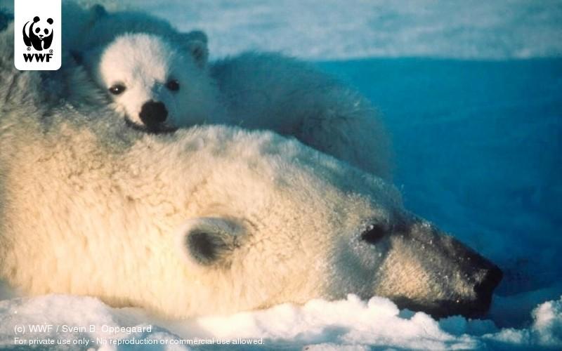 (c) WWF / Svein B. Oppegaard