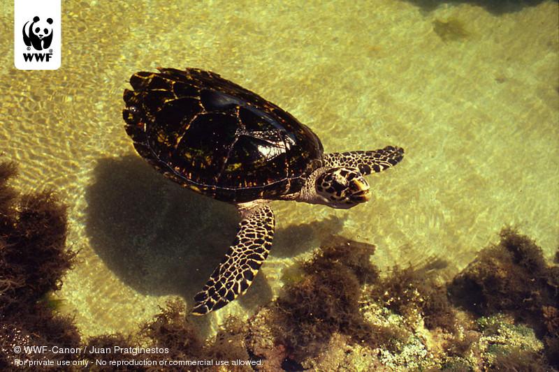© WWF-Canon / Juan Pratginestos