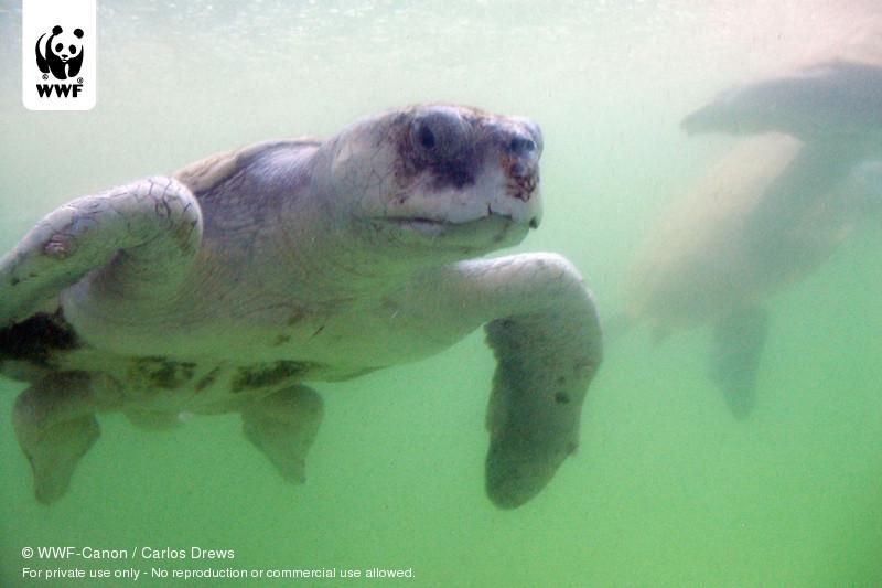 © WWF-Canon / Carlos Drews